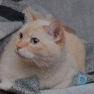 Suņu un kaķu viesnīca Baltezerā, Hotel for cats
